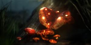 Mushrooms of Vestfold Forest